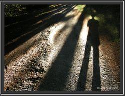 090725 - Autoportrait en forme d'arbre - Bouisset